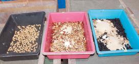 金龙鱼主要饲料 大麦虫成长看气候