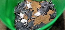 沙丹岛吹吹风  一睹海龟产卵