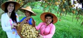 椰色果  热带水果小三