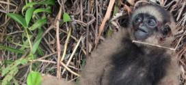 大马自然基金局吁政府  增加森林执法者资源