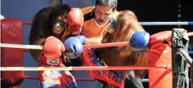 人猿泰拳对打,拳拳到肉。