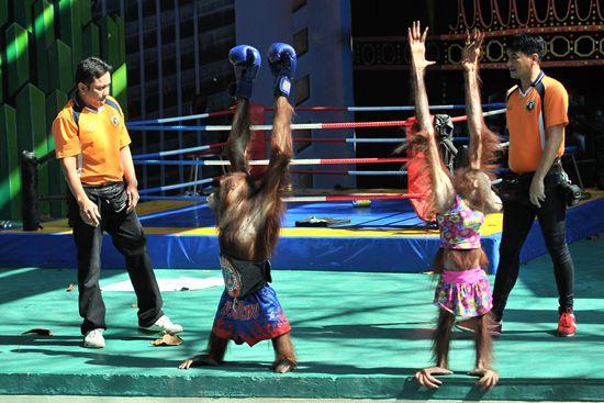 成王败寇,获得最终胜利的拳手接受现场观众的欢呼。