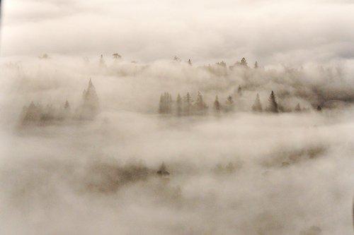 躲在云海里的树林,另有一番蒙眬美。
