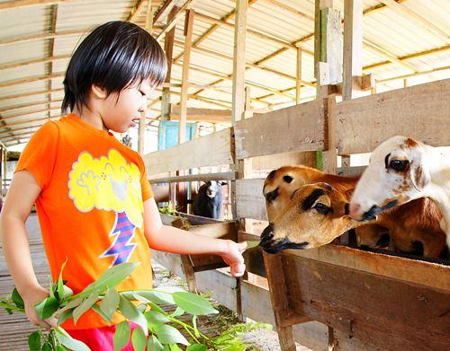 小孩喂羊吃草。郑家牧场生态之旅给孩子们带来与自然生态互动的机会。