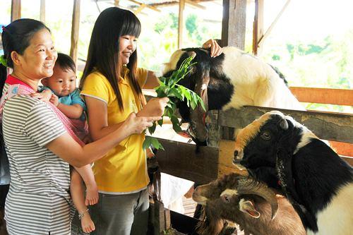 农场的游客与羊群零距离接触。
