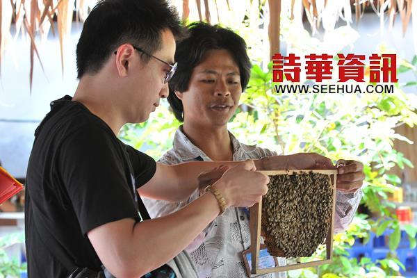 导游小心翼翼的指导游客如何手提养驯的蜂巢。