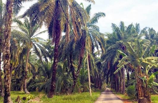 惊喜无所不在。这是由依约前往瓜拉雪兰莪的路上发现的纯朴甘榜,沿着这条小路直走,路的尽头就是一片大海。