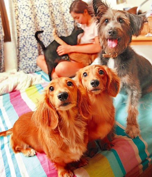 Sunny一家12貓3隻狗,毛小孩們都可以在屋內趴趴走。這屋里的貓狗正在和平相處喔!