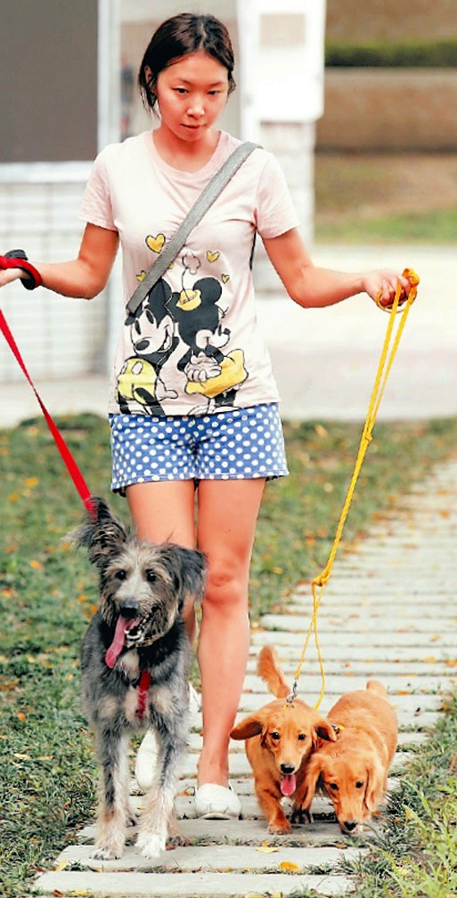 Sunny平日放假时,都会带着3只狗狗去公园遛达,让平日在家的它们得以放松。