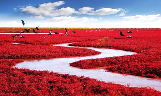 Red-Seabeach-Panjin-China-1