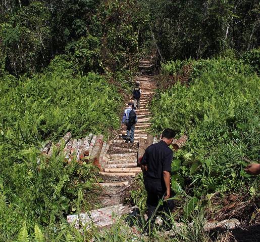 森林局的数名执法员和警员一起走进森林内进行查看。