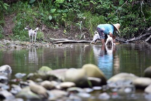 尽管当地溪流出现鳄踪,但当地居民依旧到溪流活动,甚至帮宠物狗洗澡。