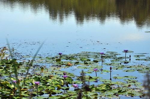 荷花点缀湖水风光更美!