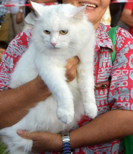 纯白的猫儿,甚讨主人欢心。